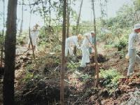整備前の裏山の「学習の森」